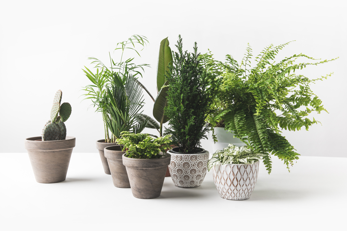 Pots of houseplants placed on a white background