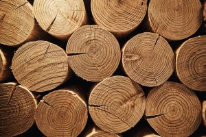 3 Slowest Burning Types of Wood for your Fireplace