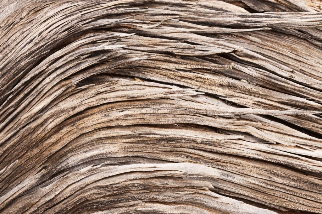 Detailed photo of a Juniper wood grain photographed up close