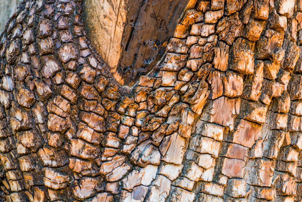 Juniper wood tree bark texture photographed up close