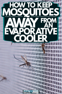 Mosquitoes gathering on the screen of the window, How To Keep Mosquitoes Away From An Evaporative Cooler